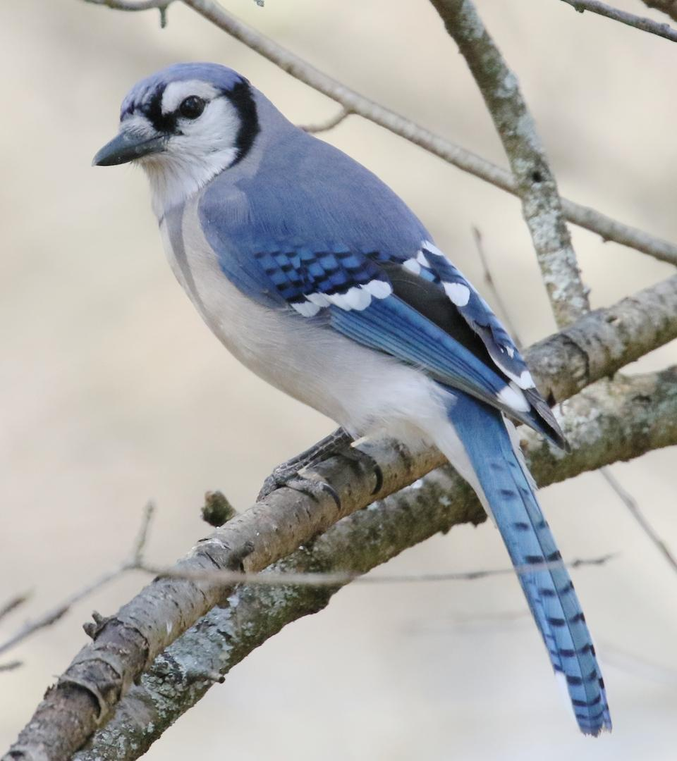 blue jay black dating site '#1 trusted dating site every day, an average of 438 singles marry a match they found on eharmony it's free to review your single, compatible matches.
