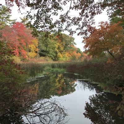 Fall colors along Hop Brook in Sudbury, photographed by Karin Paquin.