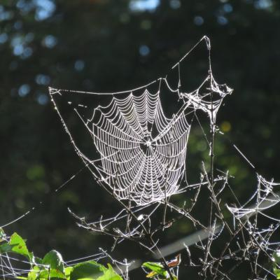 A spider web at Heard Farm in Wayland, photographed by Lisa Eggleston.