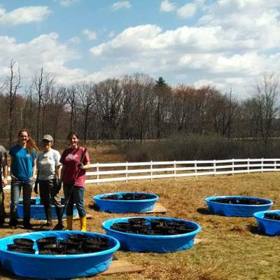 SVT staff and volunteers ready the host plants for the raising of beetles at Wolbach Farm during spring of 2015.