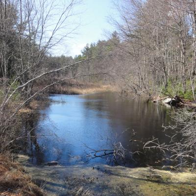 Whitehall Woods, Hopkinton