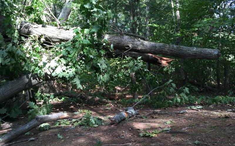 Trees knocked down by a tornado on August 22, 2016, blocked the trails at Gowing's Swamp.