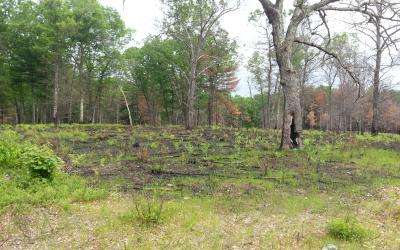 June 2014: One month after the prescribed burn.