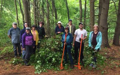Volunteers helped pulled glossy buckthorn at Elliott Concord River Preserve earlier this year.
