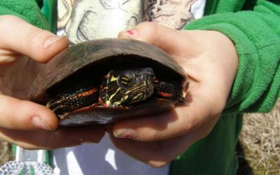 Join us for the The Great Turtle Search, which will run through mid-June.