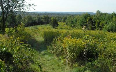 The View from the side of Cedar Hill Reservation in Northborough