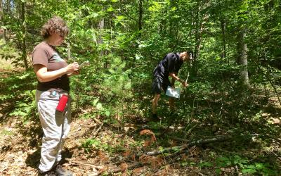 Volunteers Clare Kitchin and Mark Sykes surveyed invasive plants at Forty Caves.