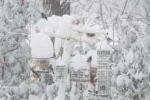 Birds at a feeder in Harvard, photographed by Robin Right.