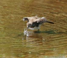 A solitary sandpiper at Hager Pond in Marlborough, photographed by Steve Forman.