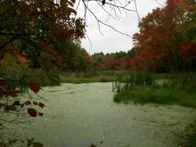 Fall foliage along Hop Brook in Sudbury, photographed by Lisa Eggleston.