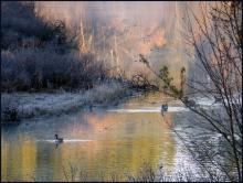 Canada geese on the Sudbury River in Lincoln, photographed by Harold McAleer.