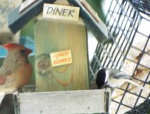 A northern cardinal and black-capped chickadee in Harvard, photographed by Robin Right.