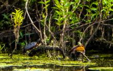 Painted turtles in Concord, photographed by Terri Ackerman.