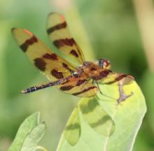 A Halloween pennant at Farm Pond in Framingham, photographed by Steve Forman.