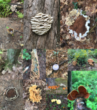 A collage of mushroom photos by Karin Paquin.