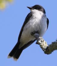 A tree swallow at Hager Pond in Marlborough, photographed by Steve Forman.
