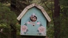 A downy woodpecker at a birdhouse in Maynard, photographed by Lisa Vernegaard.