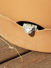 A gray tree frog in Northborough, photographed by Marnie Frankian.