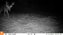 A white-tailed deer in Sudbury, photographed with an automatically triggered wildlife camera by Tom McGowan.