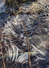Patterns in ice, photographed along Crane Swamp in Northborough by David Morgan.