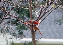 A pair of northern cardinals in Northborough, photographed by Sandy Howard.