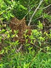 Honey bees at Westborough Wildlife Management Area, photographed by Marnie Frankian.