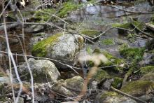 Stream at Mount Pisgah Conservation Area, photograph by David Ashley