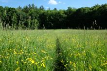 Field at Mount Pisgah Conservation Area, photograph by David Kindler